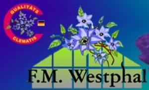 clematis-westphal